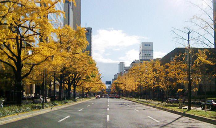 秋の御堂筋