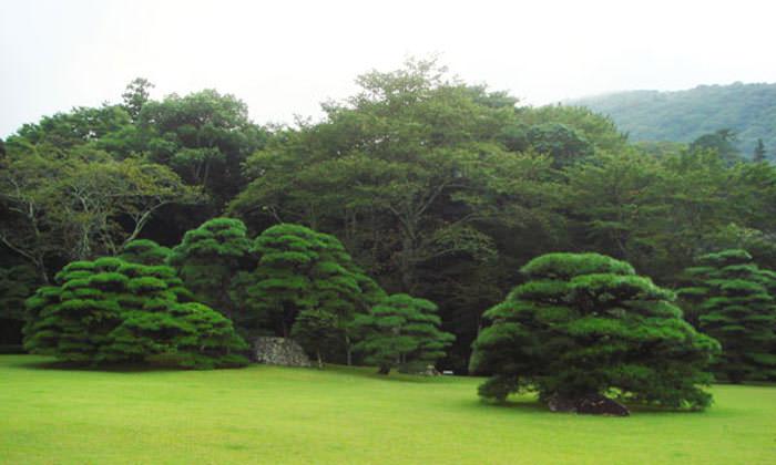 伊勢神宮の庭