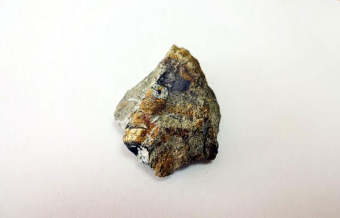 巻貝の化石