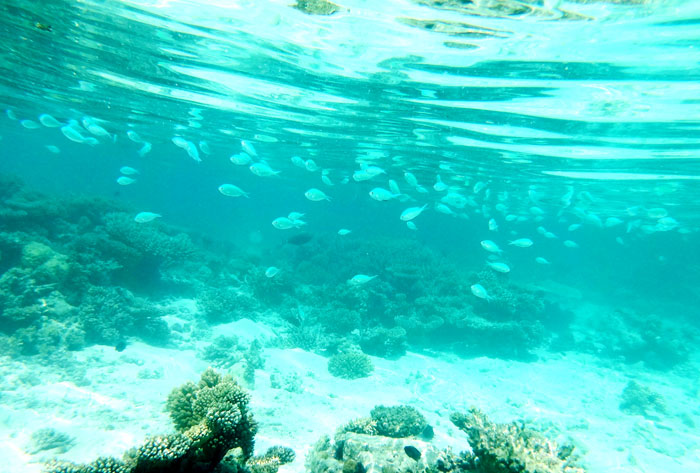 水中の魚達