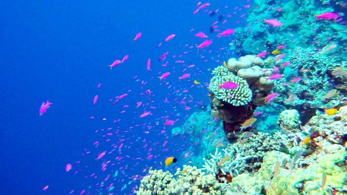Snorkeling Milne Bay, alotau, Papua New Guinea