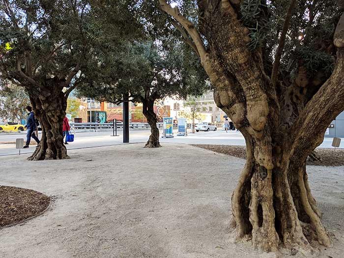 LA_olive